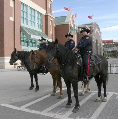 Royal Canadian Mounted Police use Breakaway Stirrups for horse safety in Calgary